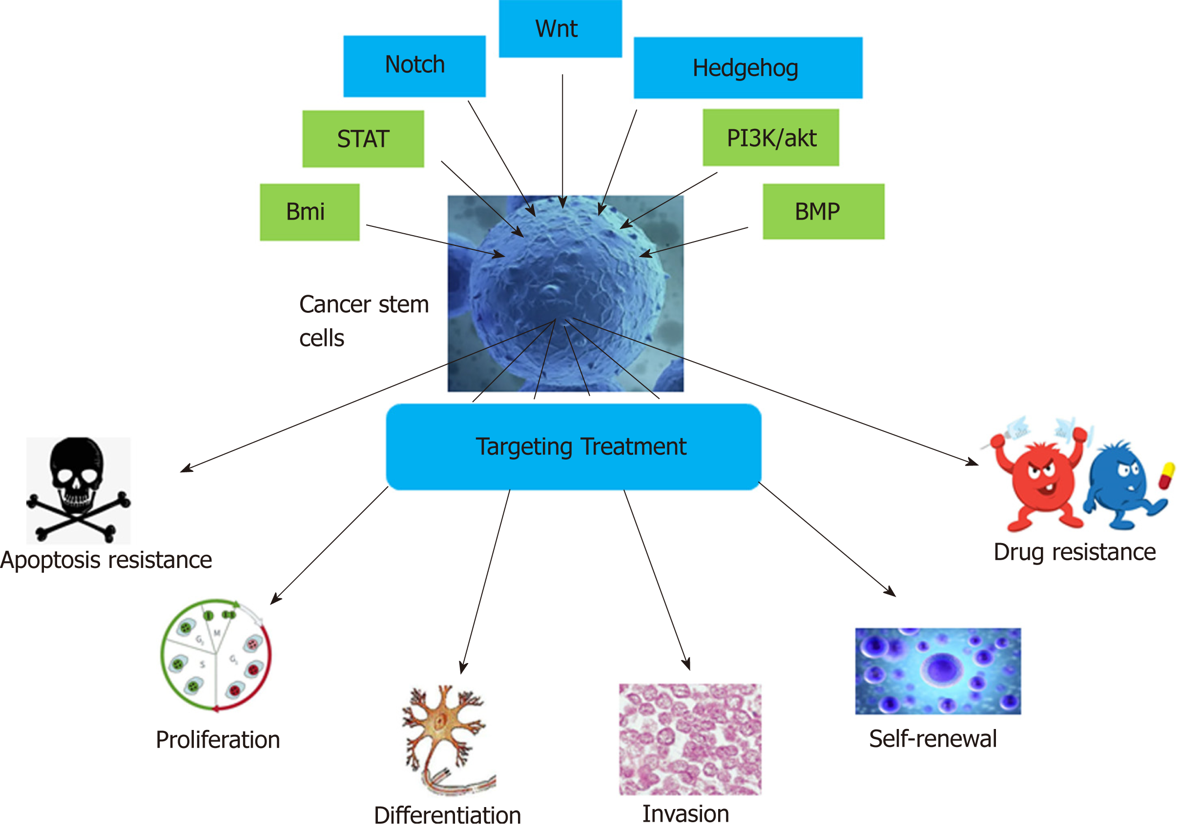Targeting cancer stem cells in drug discovery: Current state