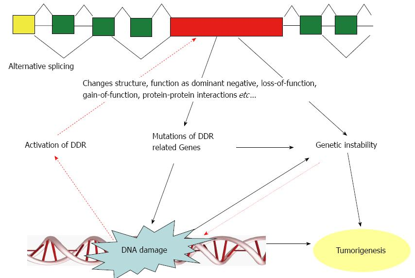 Alternative splicing of dna damage response genes and figure 1 schematic view of the possible connection between alternative splicing and dna damage when dna damage occurs dna damage response ddr is ccuart Gallery
