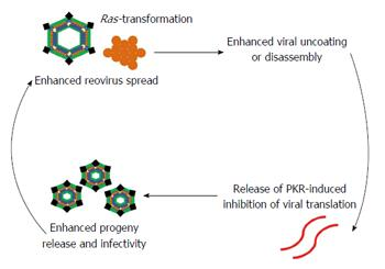 Clinical development of reovirus for cancer therapy: An
