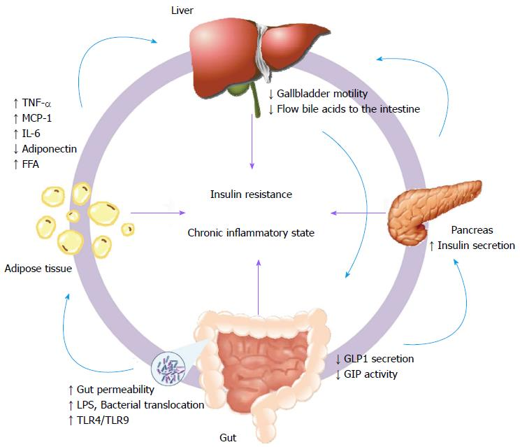 Translational approaches from fatty liver to non alcoholic figure 2 extrahepatic factors involved in the pathogenesis of non alcoholic fatty liver disease the affected organs and their response are represented in a ccuart Gallery