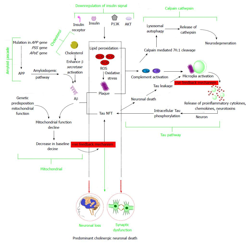 Therapeutic Targets And Delivery Challenges For Alzheimerrsquos 2 S Complement Circuit Diagram Figure Schematic Representation