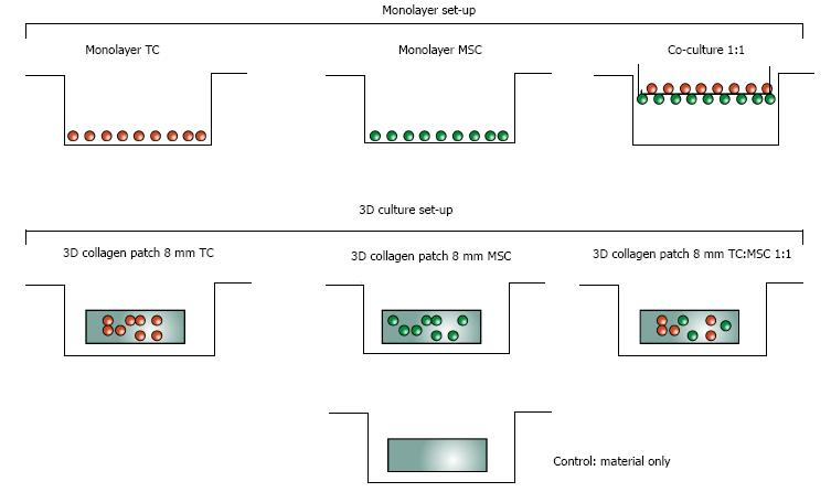 Mesenchymal Stem Cells And Collagen Patches For Anterior