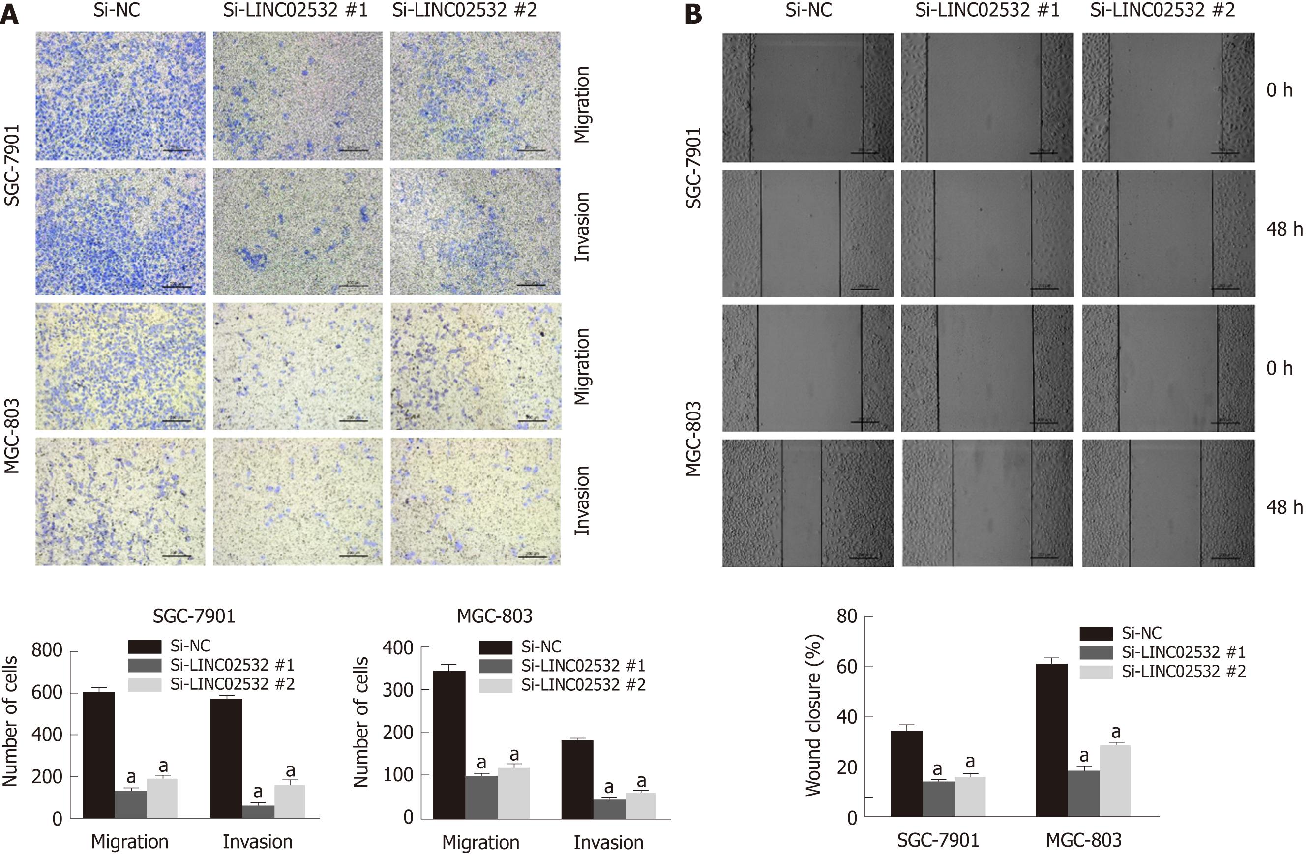 Novel long non-coding RNA LINC02532 promotes gastric cancer cell