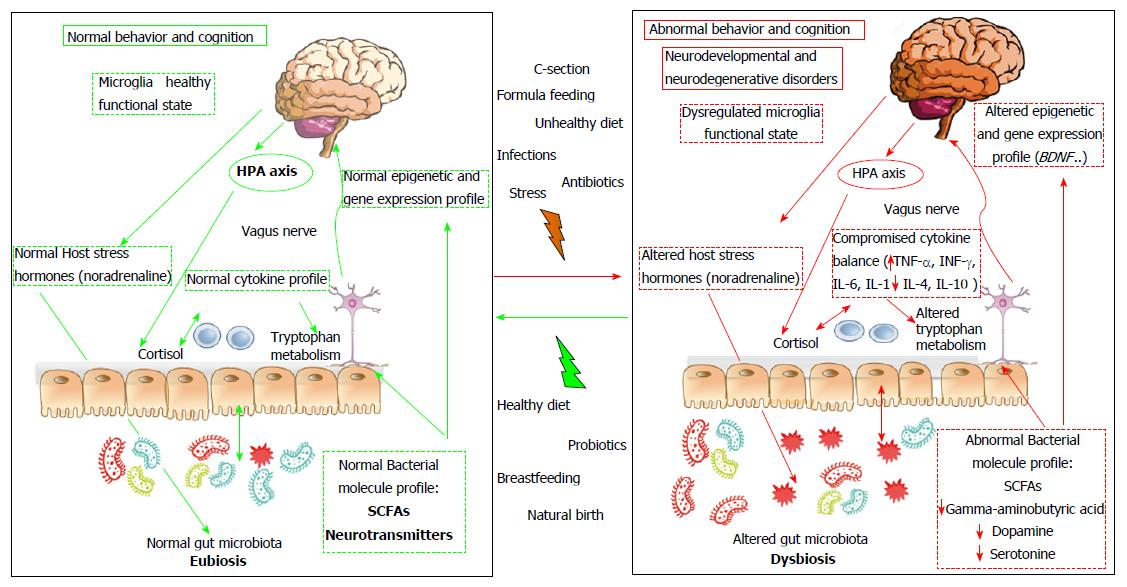 When Gut Bacteria Change Brain Function >> Influence Of Gut Microbiota On Neuropsychiatric Disorders