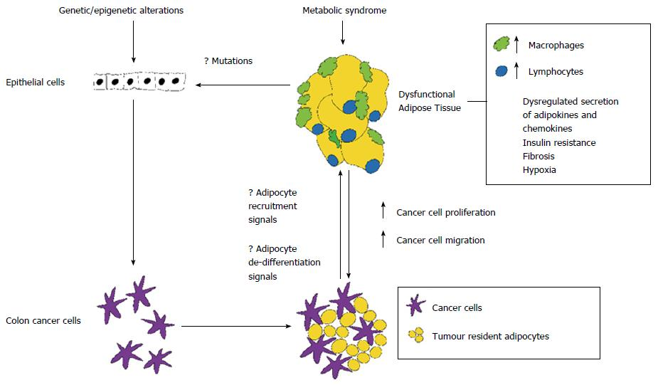 Role Of Tissue Microenvironment Resident Adipocytes In Colon Cancer