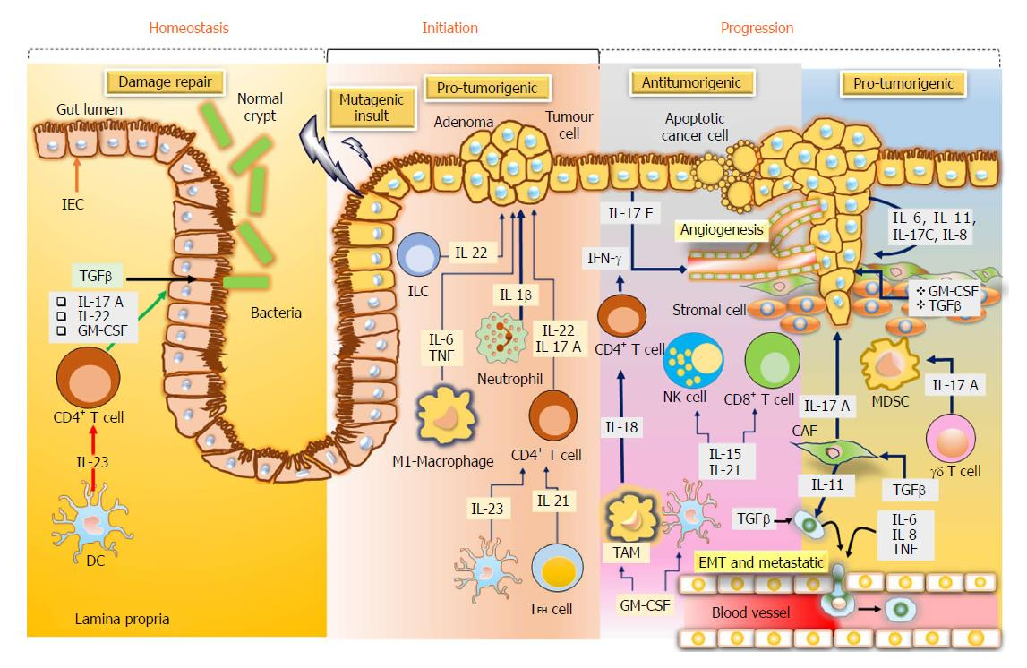 colorectal cancer pathways