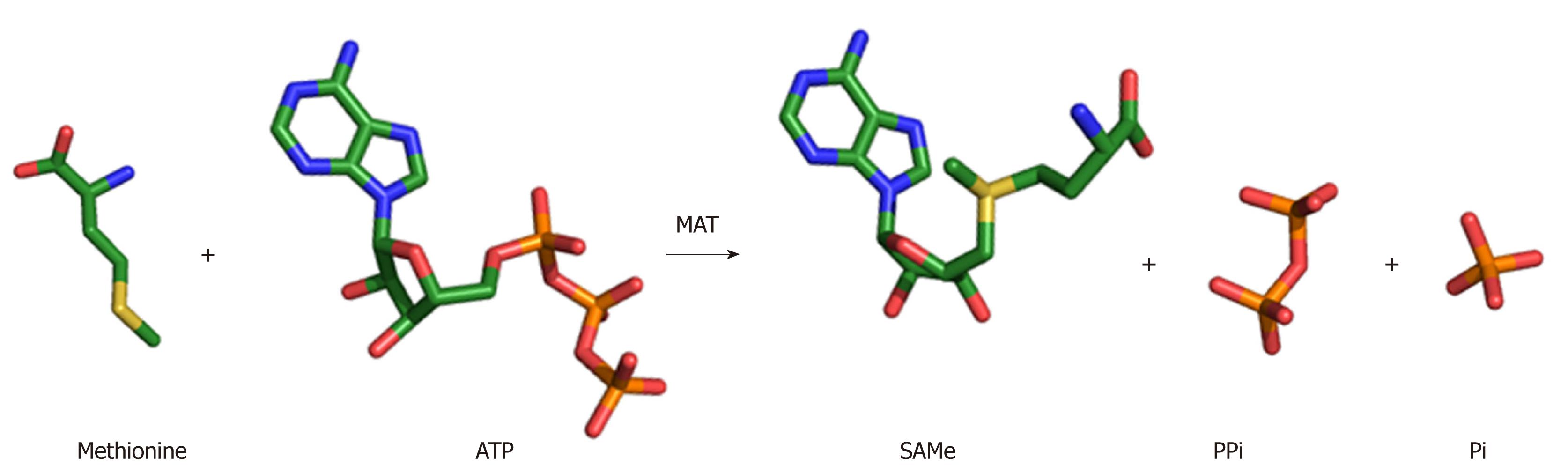 Methionine adenosyltransferases in liver cancer