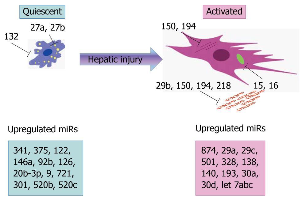 Micrornas Fad Or Future Of Liver Disease