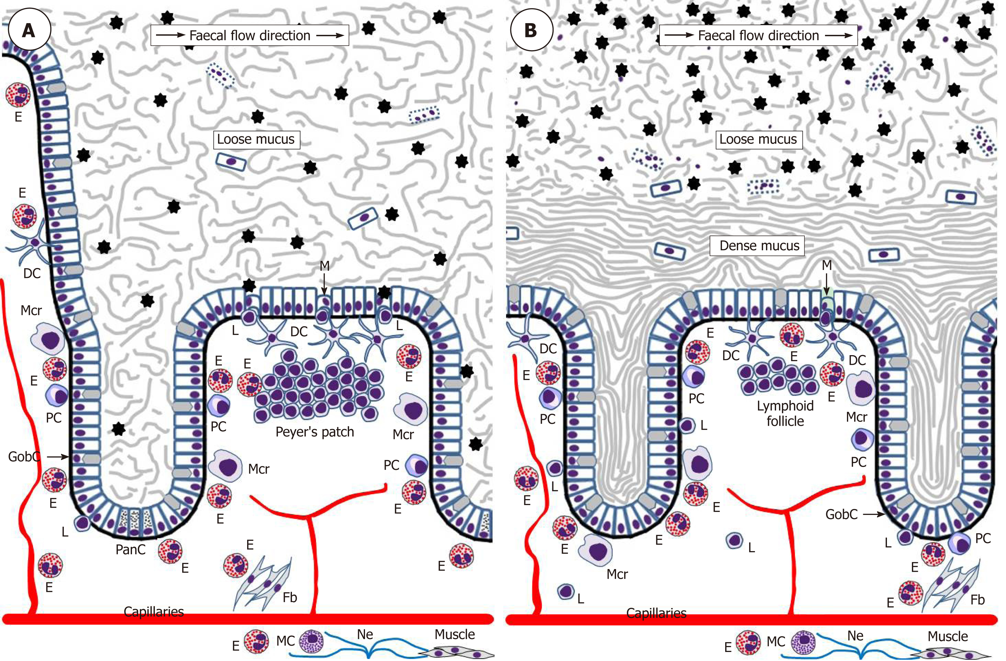 Eosinophils in the gastrointestinal tract and their role in