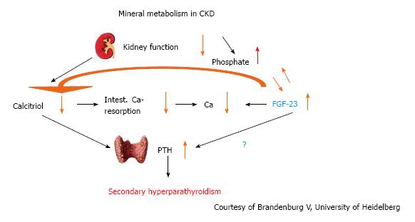 Figure 7 Interplay between calcium, phosphate, calcitriol and Fibroblast  growth factor-23 in chronic kidney disease. FGF: Fibroblast growth factor;  ...
