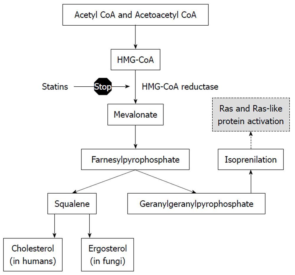 Statins As Antifungal Agents