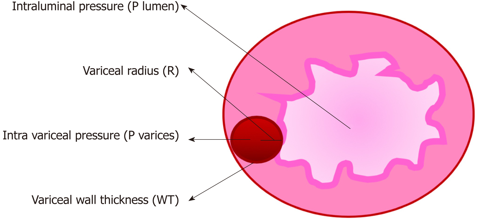 Update on the management of gastrointestinal varices