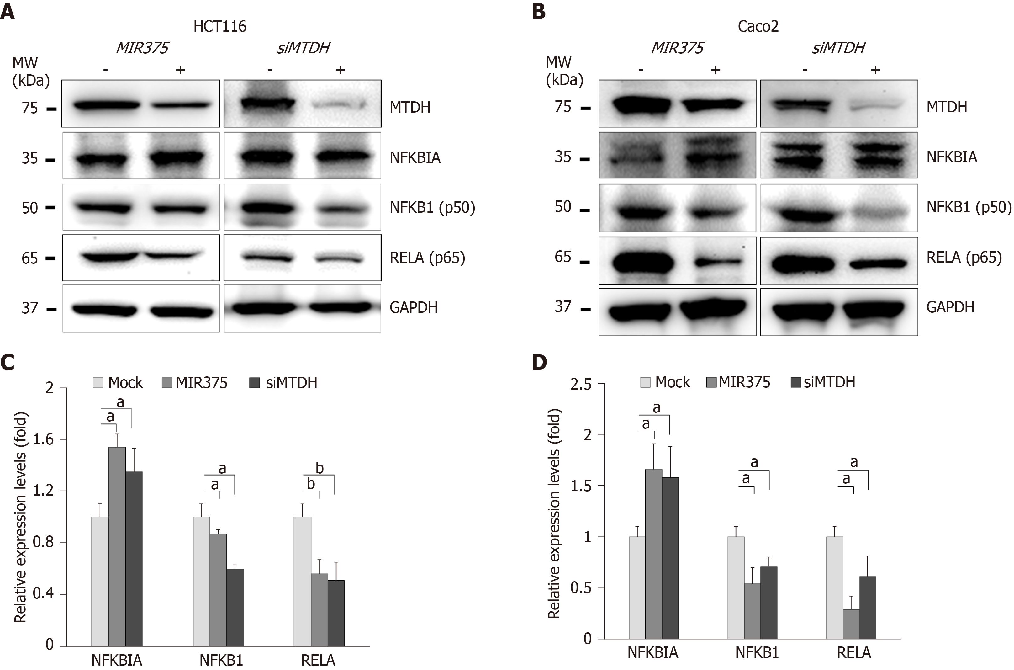 Reduced Microrna 375 In Colorectal Cancer Upregulates Metadherin Mediated Signaling