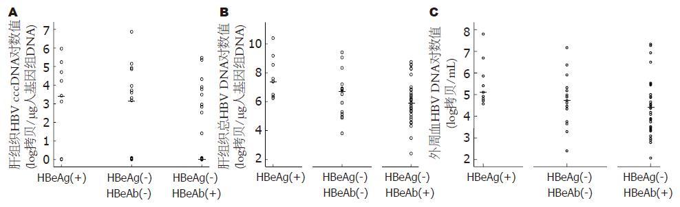 Hbv 核酸 定量