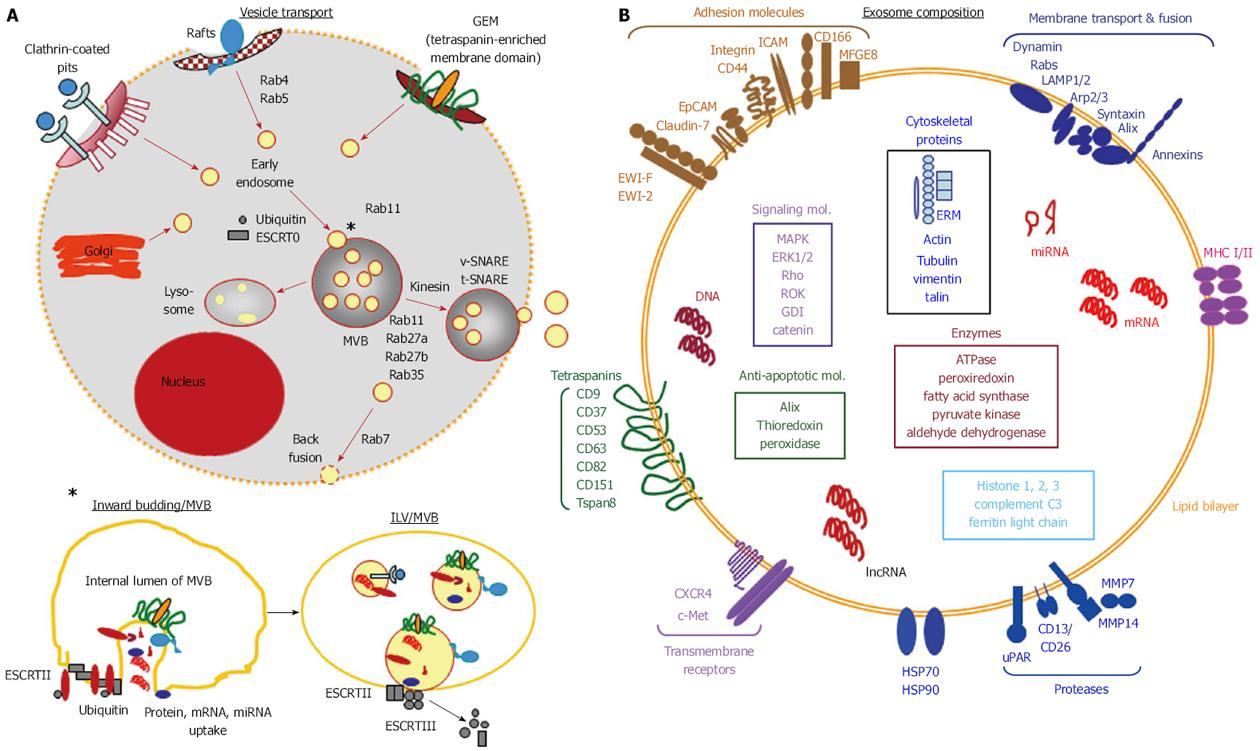 Pancreatic Cancer Stem Cell Markers And Exosomes The Incentive Push Vada Fuse Box Figure 1