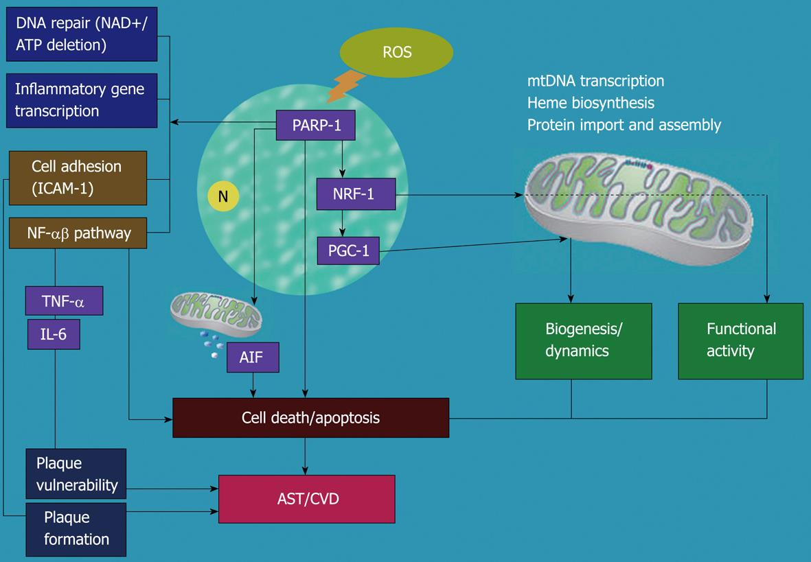 role of nad What is the role of nad in cellular respiration nads or nicotinamide adenine dinucleotide are enzymes the nads actas electron and hydrogen carriers in oxidation-.