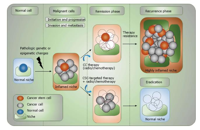 Tracing and targeting cancer stem cells: New venture for