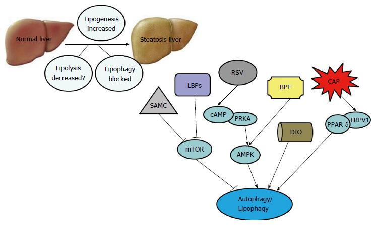 Traditional Chinese herbal extracts inducing autophagy as a novel