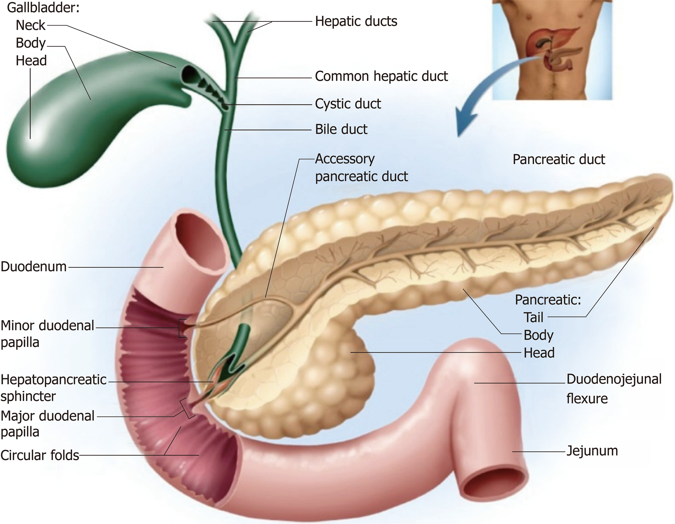 Difficult biliary cannulation: Historical perspective ...