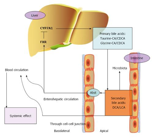 Role of bile acids in carcinogenesis of pancreatic cancer
