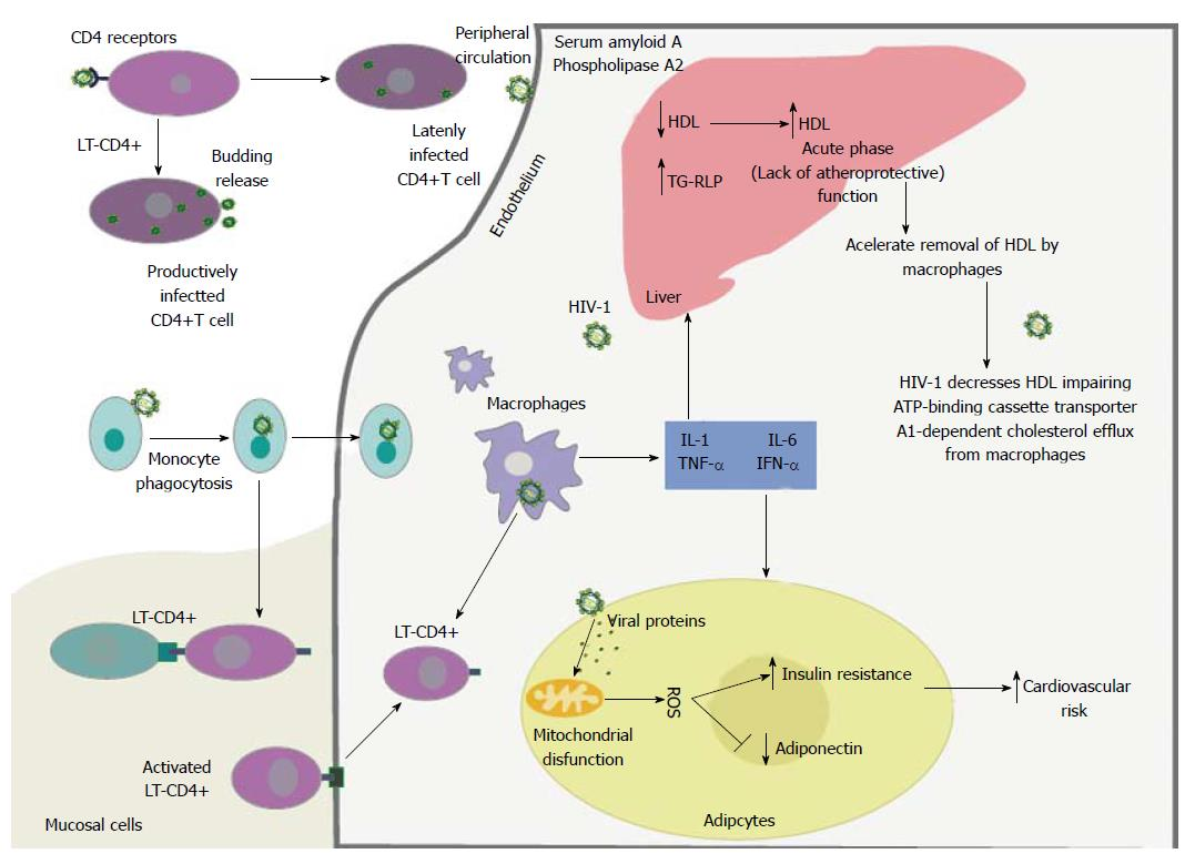 Impact of antiretroviral therapy on lipid metabolism of human