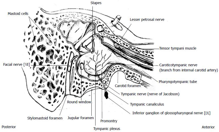 Clinical Anatomy Of The Tympanic Nerve A Review