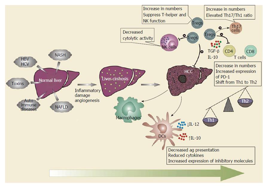 Immunology Of Hepatocellular Carcinoma