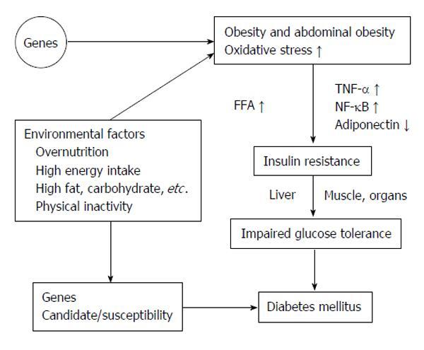 diabetes mellitus tipo 2 patogénesis