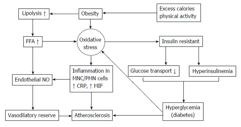 Oxidative stress, insulin resistance, dyslipidemia and