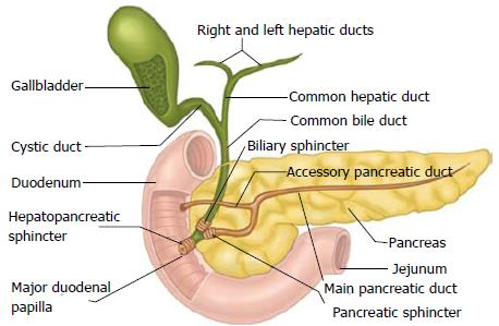 Endoscopic Management Of Benign Biliary Strictures
