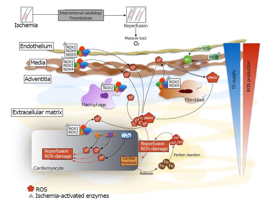 Myocardial reperfusion injury and oxidative stress