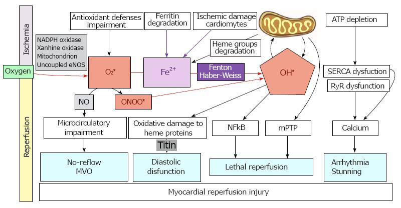 Management of Myocardial Reperfusion Injury