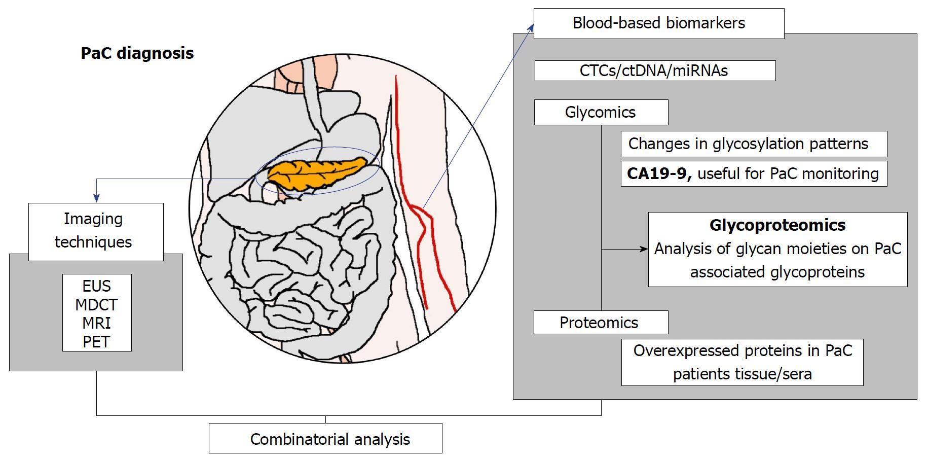 Pancreatic cancer biomarkers, Ana-Maria Enciu - Referințe bibliografice Google Academic