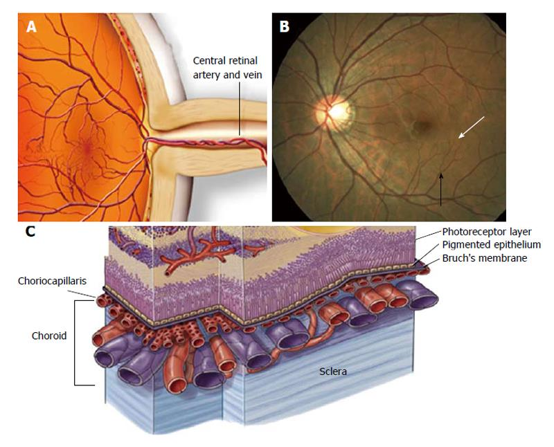 Angiotensin II-related hypertension and eye diseases