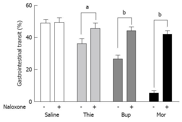 Effect of thienorphine on intestinal transit and isolated