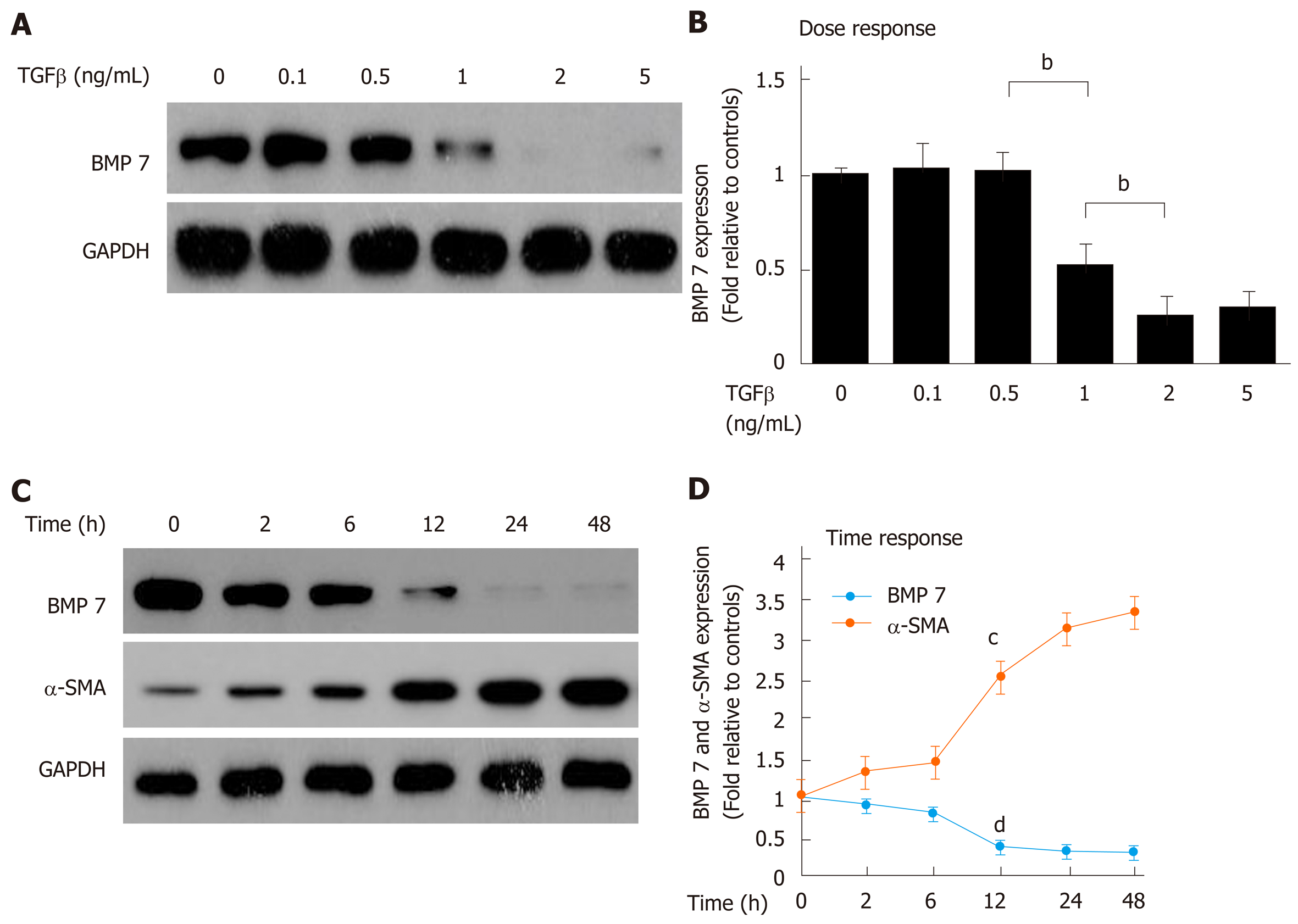 Bone morphogenetic protein-7 represses hepatic stellate cell
