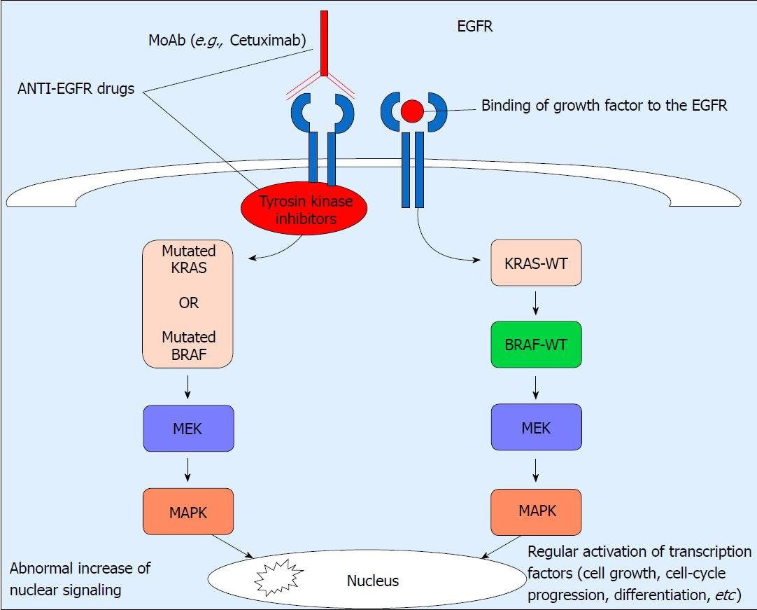 Biomarkers In Colorectal Cancer Current Clinical Utility And Future Perspectives