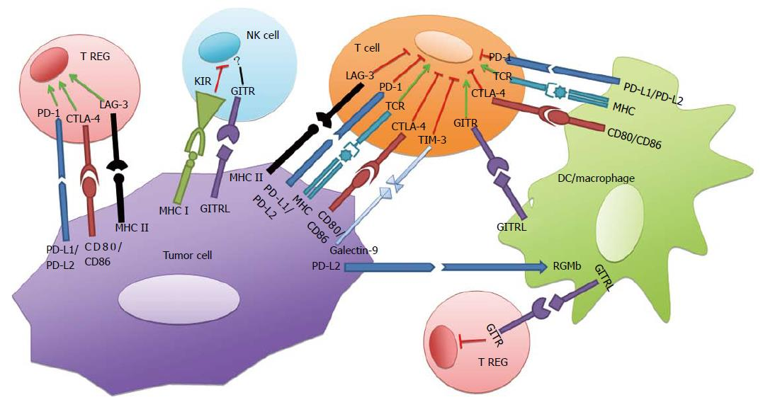 Present and future of immune checkpoint blockade: Monotherapy to
