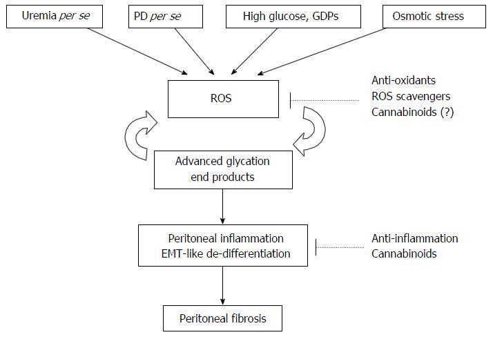 Targeting Cannabinoid Signaling For Peritoneal Dialysis Induced