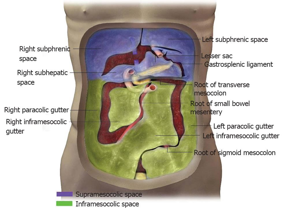 Paracolic Gutter Retroperitoneal Peritoneum Slides The