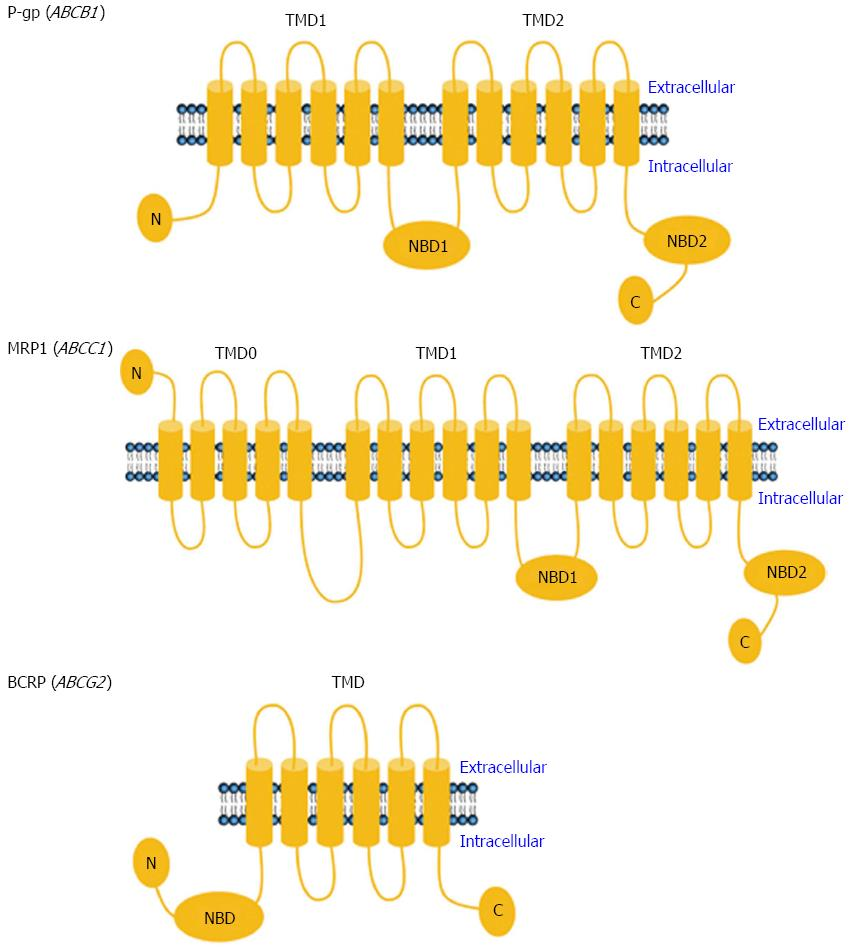 Mechanisms Of Drug Resistance In Colon Cancer And Its