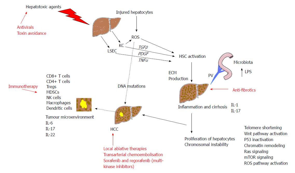 Carcinogenesis on the background of liver fibrosis