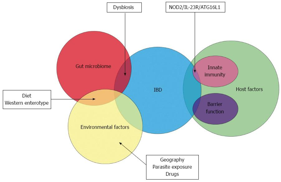 Role of the gut microbiota in inflammatory bowel disease