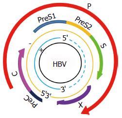 慢性乙型病毒性肝炎_甲胎蛋白在乙型肝炎病毒诱导肝癌发生中的作用及临床应用展望