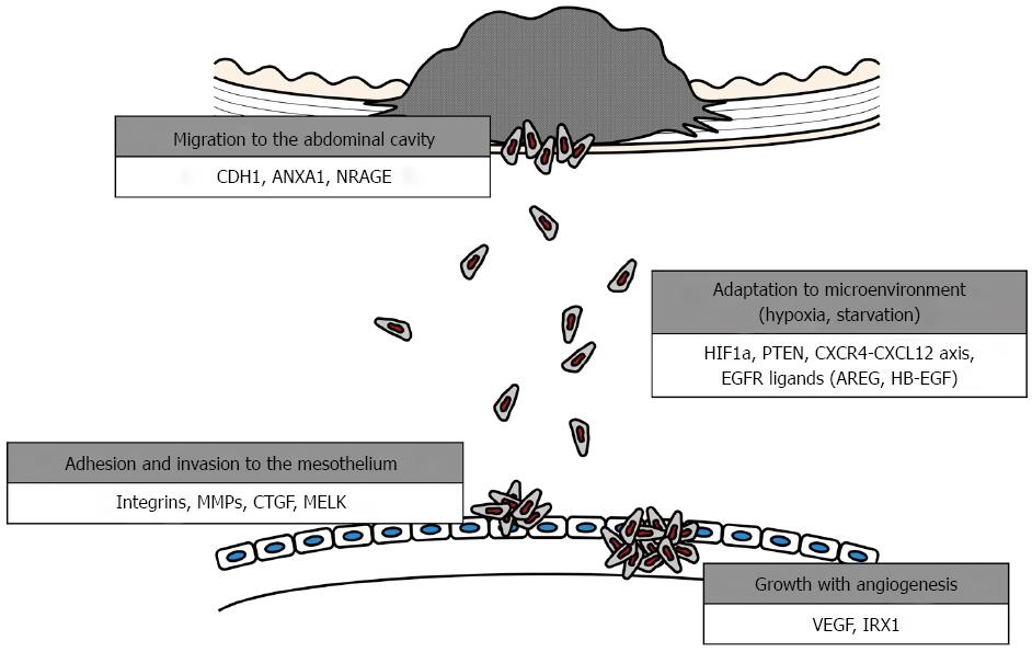 Peritoneal cancer hereditary - Cancer de boca por hpv