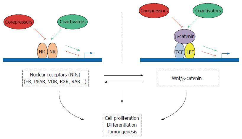 Nuclear Receptor Coregulators and Human Diseases