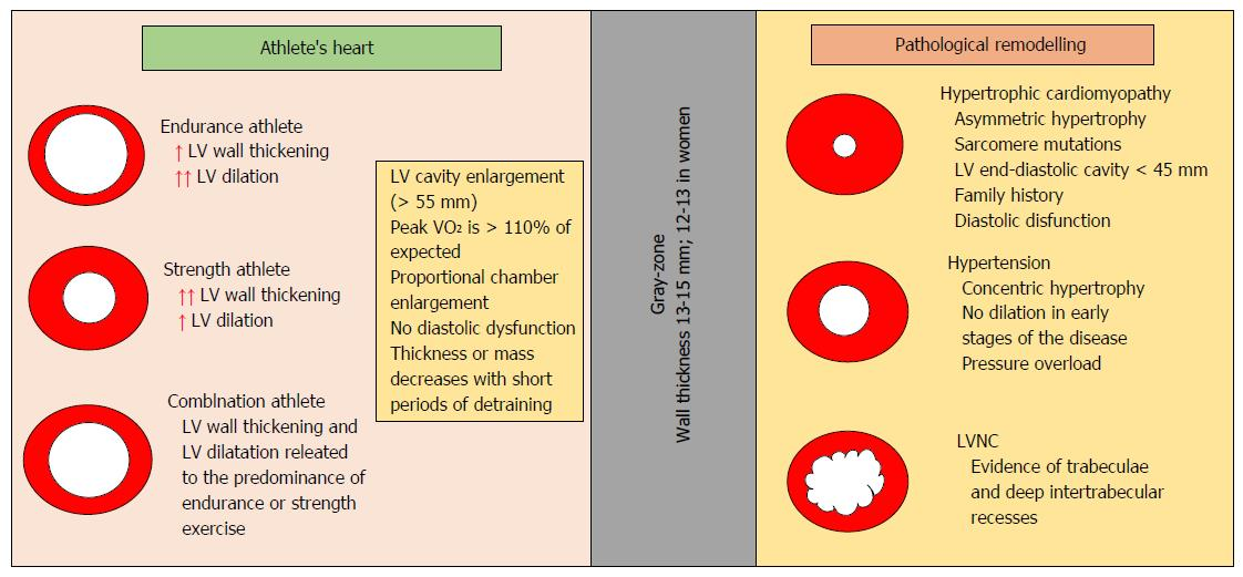 Cardiac Damage In Athletes Heart When The Supernormal Heart Fails