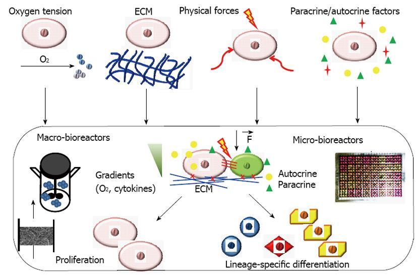 Engineering stem cell niches in bioreactors