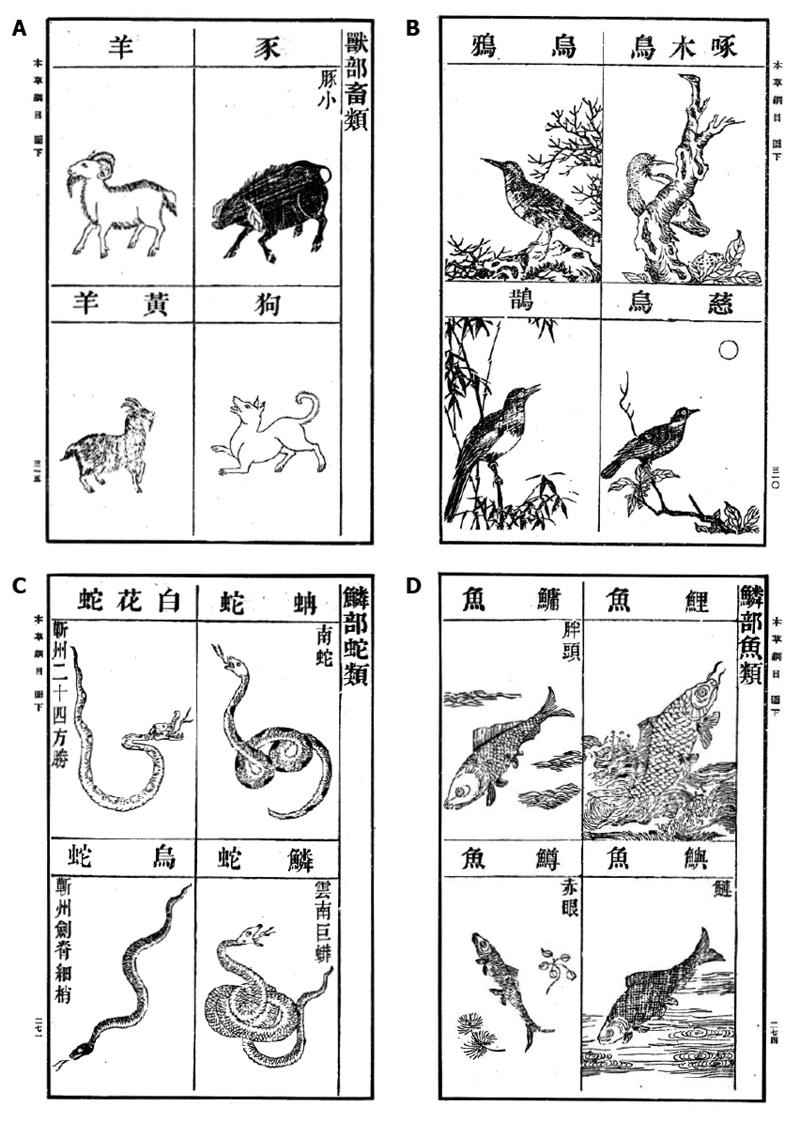 Therapeutic uses of animal biles in traditional Chinese medicine: An