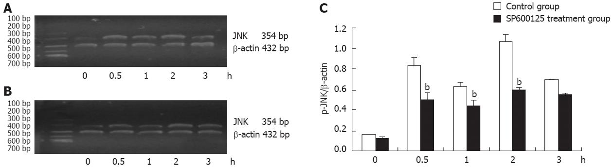 c-Jun N-terminal kinase is required for thermotherapy